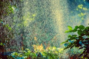 sprinkler spray on garden | sprinkler irrigation advantages | Designer Watering Systems