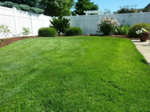 green lawn with white picket fance | domestic irrigation tips | Designer Watering